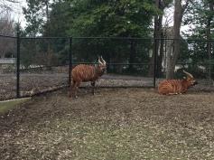 Bongo Fence
