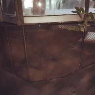 White Alligator Exhibit