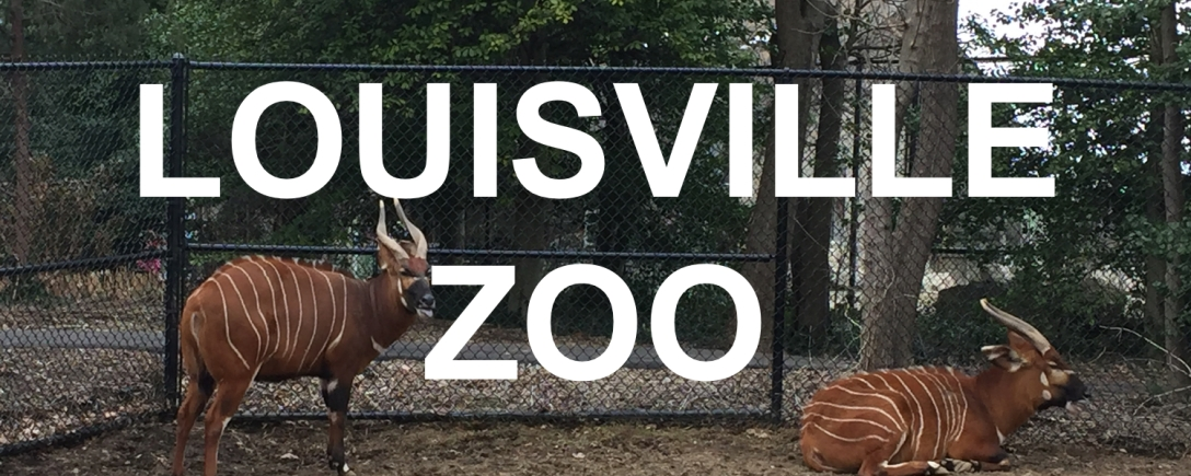 Louisville Zoo Fence